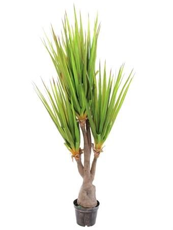 stor kaktus säljes