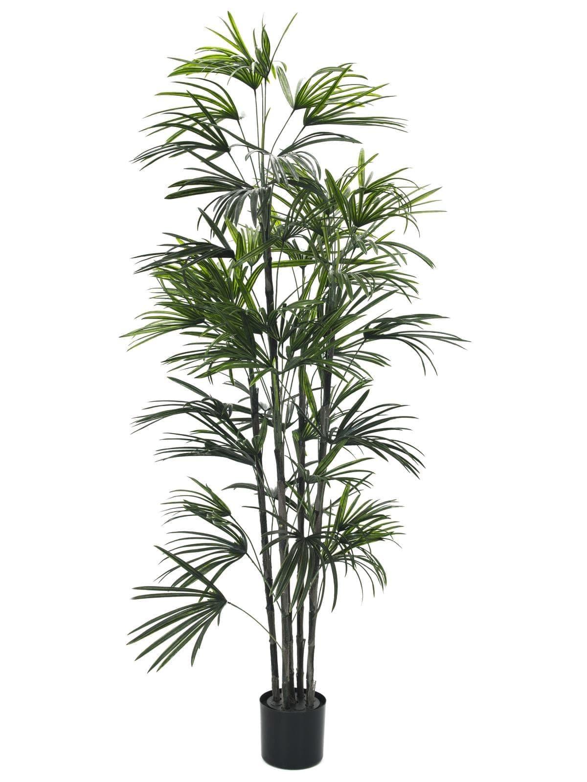 EUROPALMS Fan palm seedling, artificial plant, 150cm